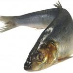 Жирная рыба (сельдь)